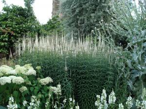 contrast white garden
